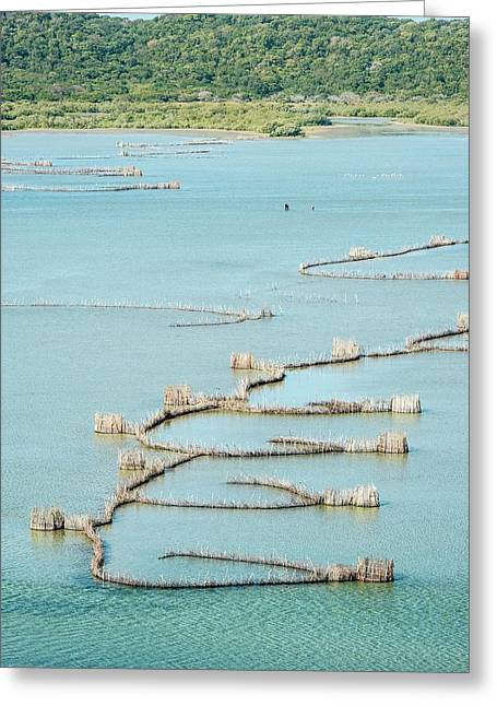 Fish Traps Greeting Card by Peter Chadwick