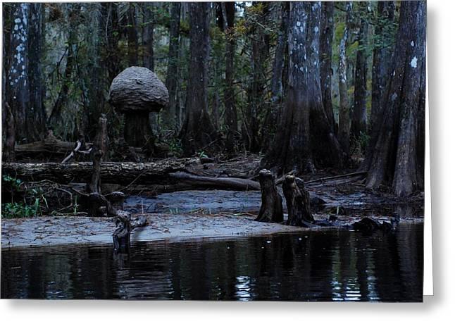 Fisheating Creek 26 Greeting Card by Carol Kay