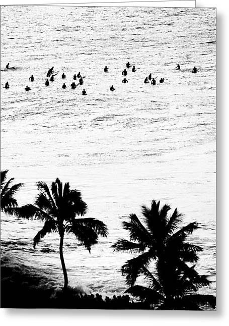 Surf Silhouette Greeting Cards - Fisher Palms Greeting Card by Sean Davey