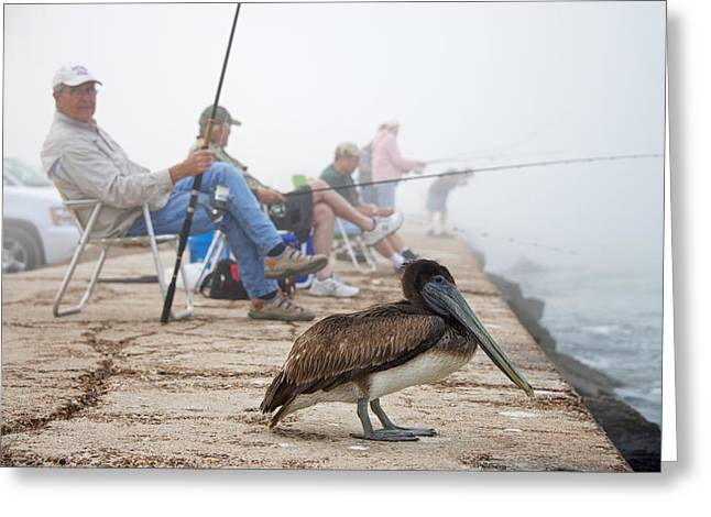 Lawn Chair Greeting Cards - Fishermen and Pelican Greeting Card by Mary Lee Dereske