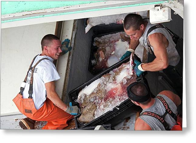 Fishermen Unloading Their Catch Greeting Card by Jim West