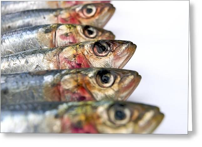 Fishes Greeting Card by BERNARD JAUBERT