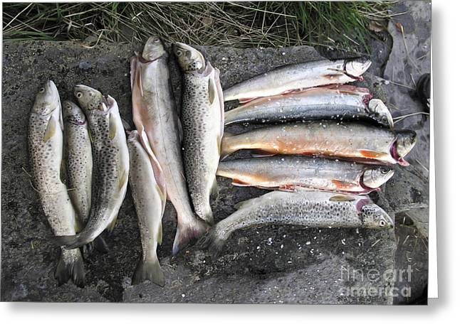 Throwing Food Greeting Cards - Fishes Greeting Card by IB Photo