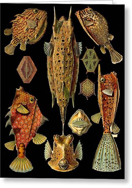 Kunstformen Der Natur Greeting Cards - Fishes on Black Greeting Card by Diane Addis
