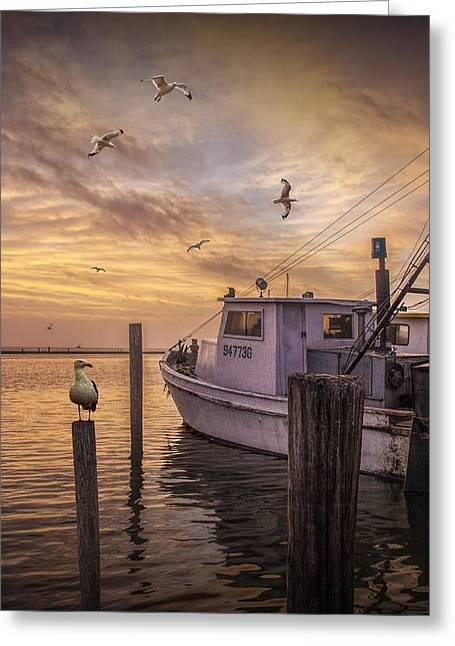 Flying Gulls Greeting Cards - Fishing Boat and Gulls at Aransas Pass Harbor Greeting Card by Randall Nyhof