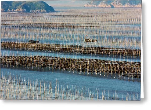 Fishing Boat Sailing Through Bamboo Greeting Card by Keren Su