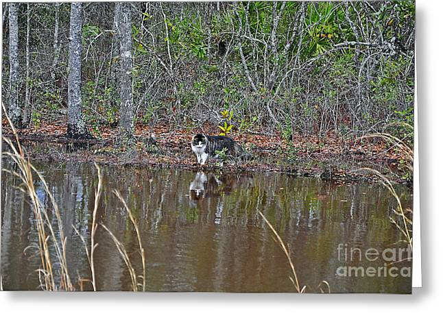 Fishing Feline Greeting Card by Al Powell Photography USA