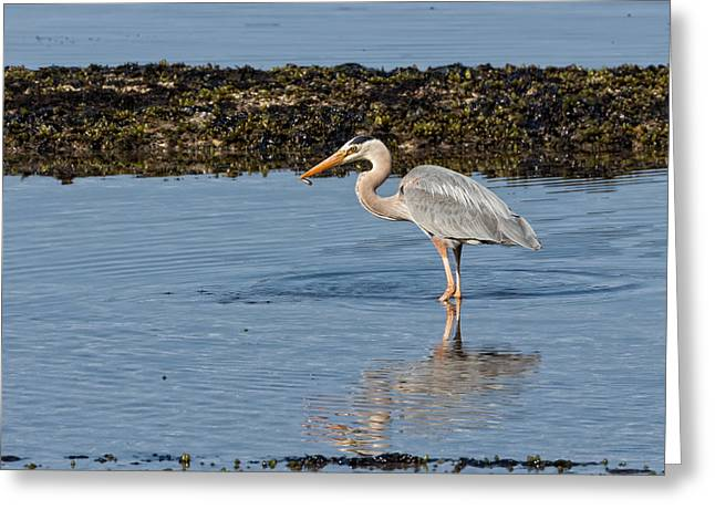 Photorealism Greeting Cards - Fishing in the Tide Pool Greeting Card by Kathleen Bishop