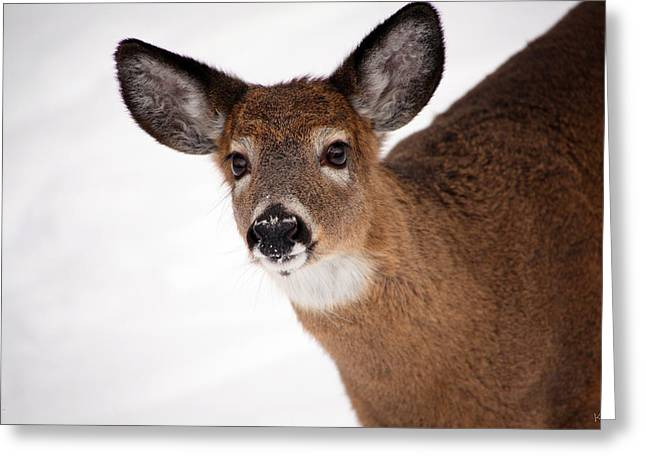 Deer In Snow Greeting Cards - Fits Those Ears Greeting Card by Karol  Livote