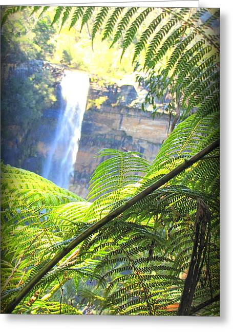 The Followers Greeting Cards - Fitzroy Falls Sydney Greeting Card by Henry Adams