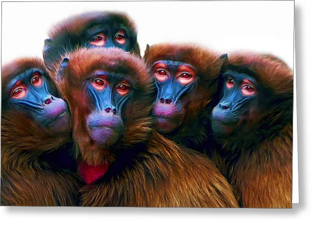 Yeti Greeting Cards - Five Baboons Greeting Card by Daniel Hagerman