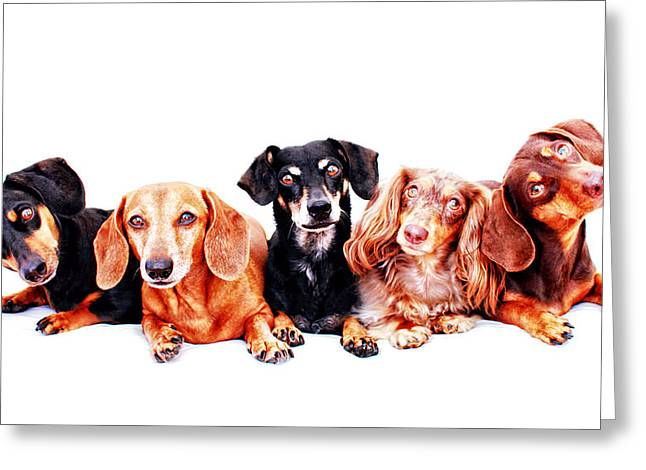 Hounddog Greeting Cards - Five Dachshunds  Greeting Card by Johnny Ortez-Tibbels