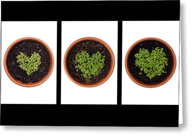 Germinate Greeting Cards - Five Days on Black Greeting Card by Anne Gilbert