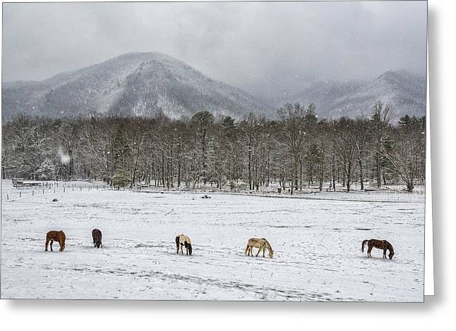 Best Sellers -  - Grazing Snow Greeting Cards - Five Horses During Smoky Mountain Snowfall E92 Greeting Card by Wendell Franks