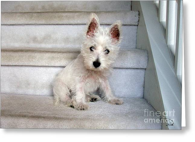 Westie Pups Greeting Cards - Five Pounds of Love Greeting Card by Dianne Wendell