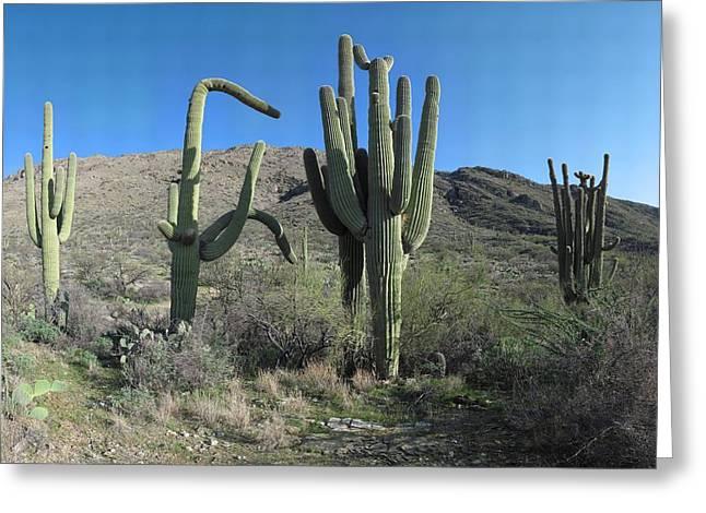 Rincon Mountains Greeting Cards - Five Saguaros at Saguaro National Park AZ  Greeting Card by Brian Lockett