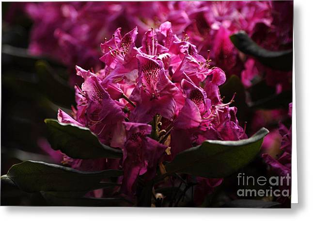 Flovers Greeting Cards - Fl5133 Greeting Card by Leo Symon