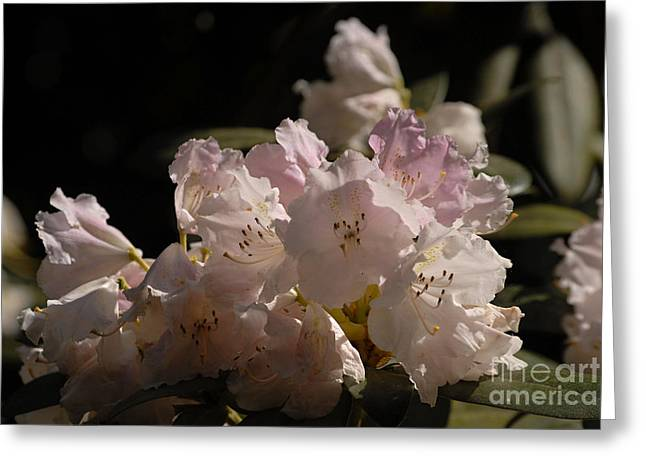 Flovers Greeting Cards - Fl5134 Greeting Card by Leo Symon