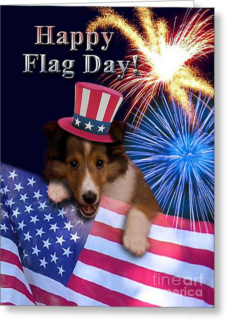 Wildlife Celebration Greeting Cards - Flag Day Sheltie Puppy Greeting Card by Jeanette K