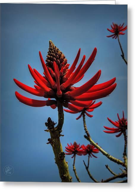 Regia Greeting Cards - Flamboyant 001 Greeting Card by Lance Vaughn