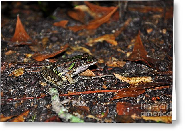 Al Powell Photography Usa Greeting Cards - Flamboyant Frog Greeting Card by Al Powell Photography USA