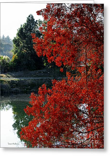 Susan Wiedmann Greeting Cards - Flame Red Tree Greeting Card by Susan Wiedmann