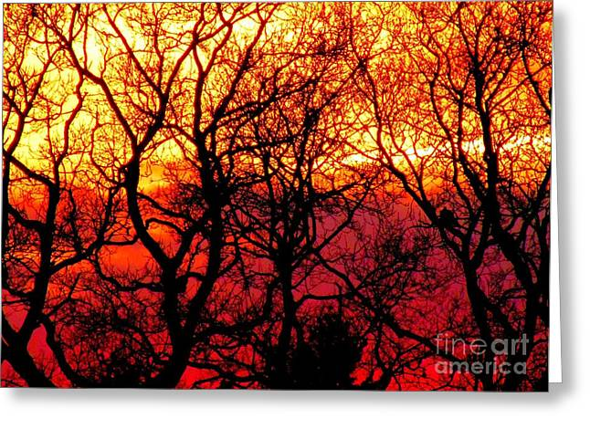 Textile Photographs Greeting Cards - Flame Sunset Greeting Card by Callan Percy