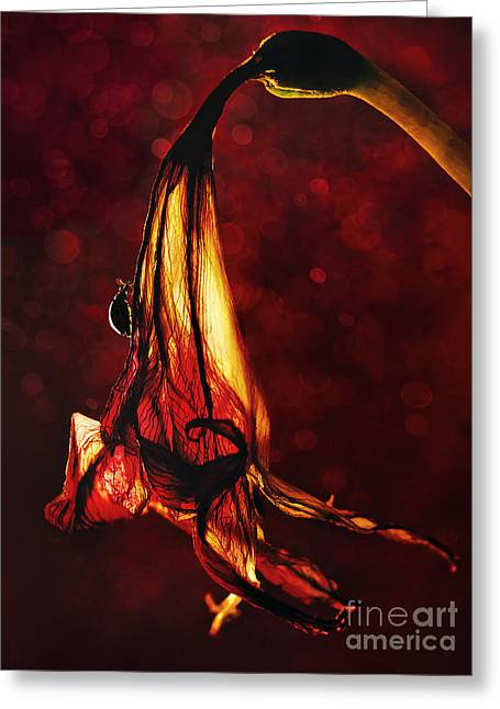 Atmoshperic Greeting Cards - Flamenco Greeting Card by Jaroslaw Blaminsky