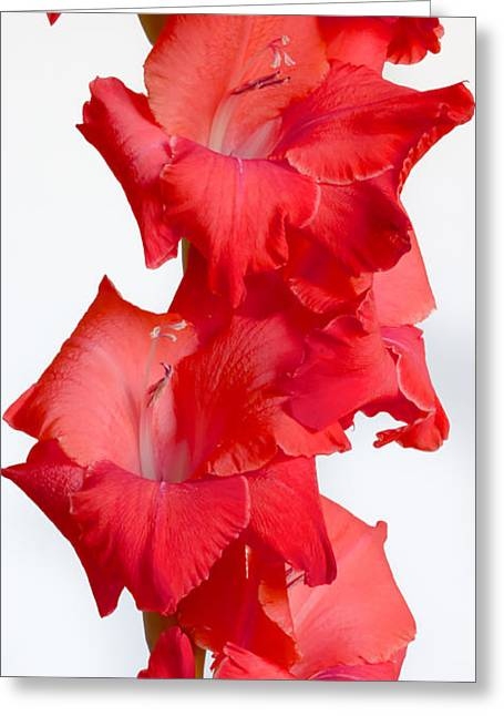 Spanish Dancer Greeting Cards - Flamenco Greeting Card by Heidi Smith