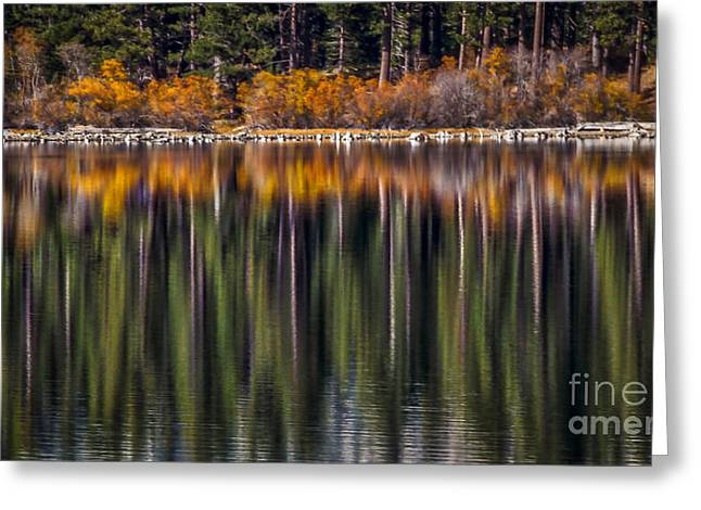 Flames Of Autumn Greeting Card by Mitch Shindelbower