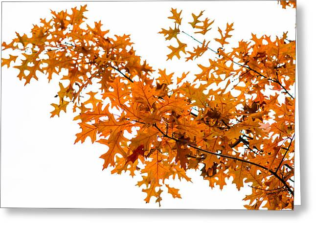 Flames Of The Season - Featured 3 Greeting Card by Alexander Senin