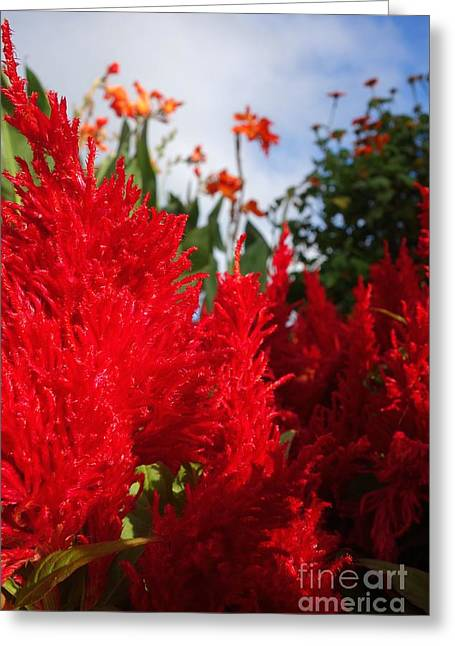 Fall Grass Greeting Cards - Flaming Feathered Flower Power Greeting Card by Jacqueline Athmann
