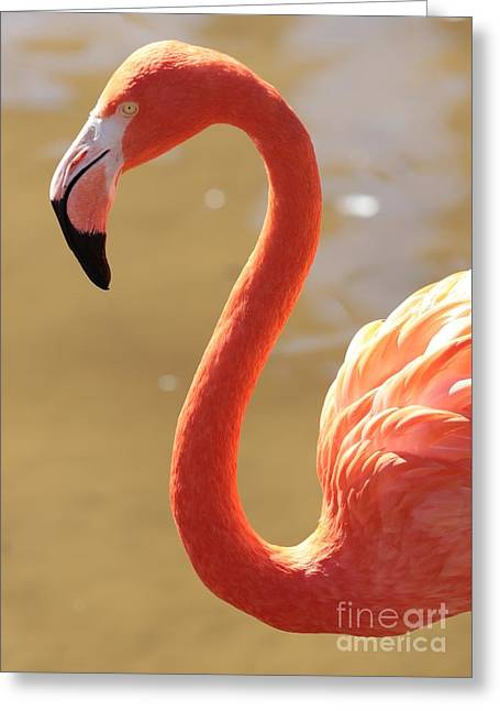 Greater Flamingos Greeting Cards - Flaming Flamingo Greeting Card by Carol Groenen