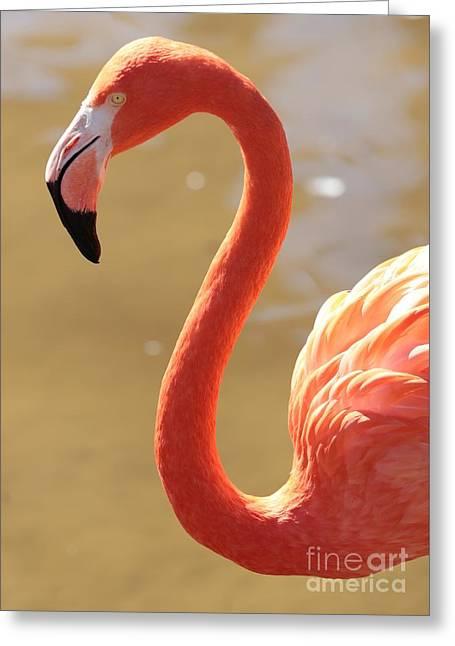 Greater Flamingos Greeting Cards - Flaming Flamingo Greeting Card by Carol Groenen
