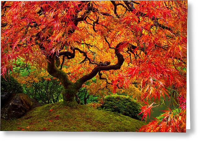 Flaming Maple Greeting Card by Darren  White