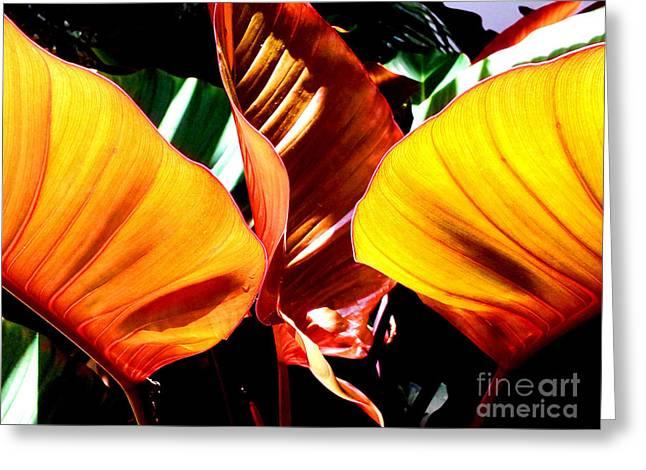 Flaming Plant Greeting Card by Kristine Merc
