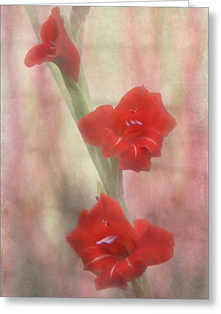 Gladiolas Greeting Cards - Flaming Red Greeting Card by Angie Vogel