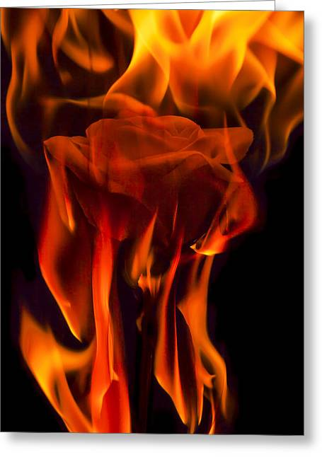 Burning Greeting Cards - Flaming Rose Greeting Card by Jon Glaser