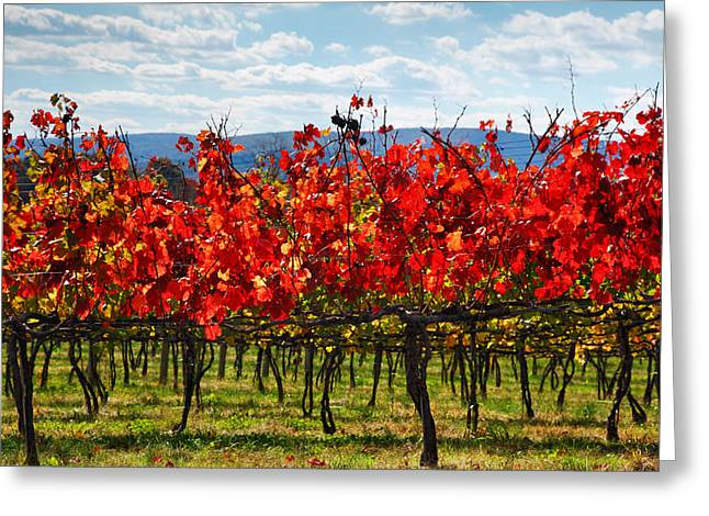 Seasonal Prints Rural Prints Greeting Cards - Flaming Vineyard Greeting Card by Steven Ainsworth