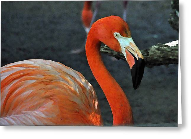 Angela Castillo Greeting Cards - Flamingo Greeting Card by Cherie Haines