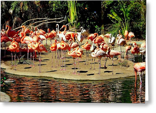 Flamingo Family Reunion Greeting Card by Karen Wiles