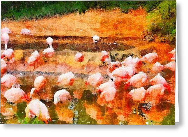 D Wade Greeting Cards - Flamingo Gathering Greeting Card by Dan Sproul