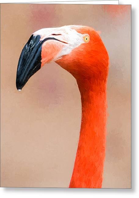 Drop Greeting Cards - Flamingo Head - Digital Photo Art Greeting Card by Duane Miller