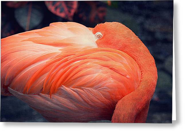 Greater Flamingos Greeting Cards - Flamingo Greeting Card by Maria Angelica Maira