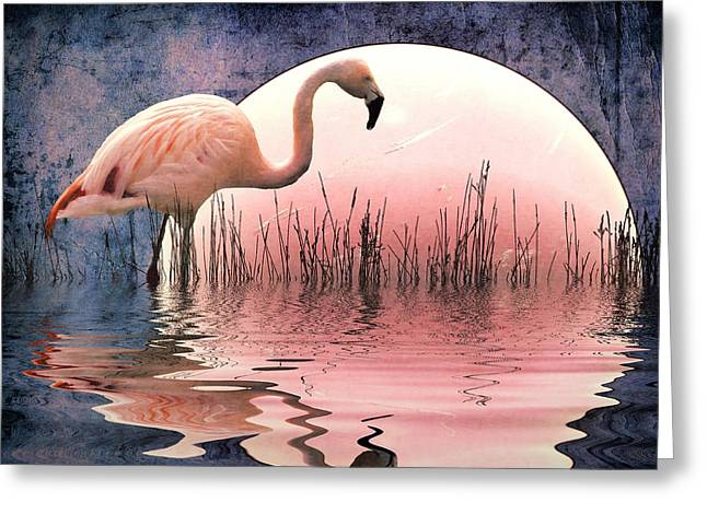 Birds Moon Greeting Cards - Flamingo Moon Greeting Card by Sharon Lisa Clarke