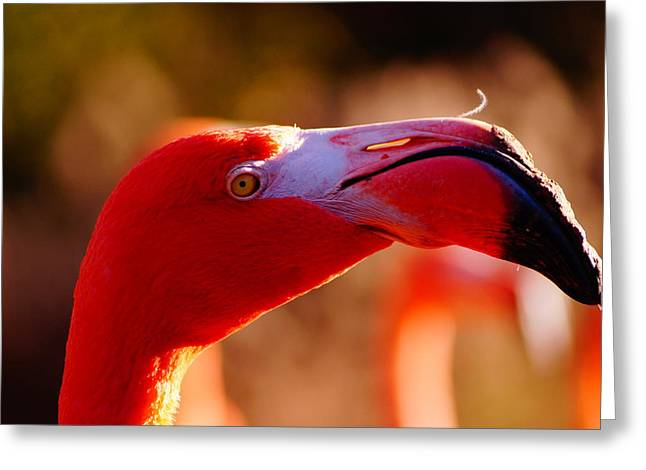 Flamingo-Profile Greeting Card by Angelika Sauer
