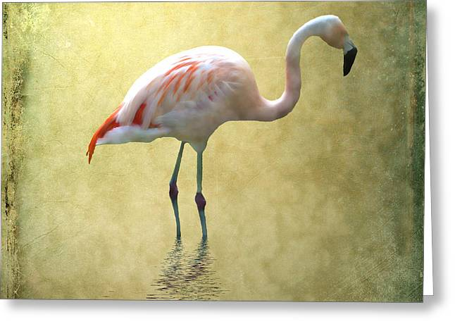 Wild Bird Mixed Media Greeting Cards - Flamingo Greeting Card by Sharon Lisa Clarke