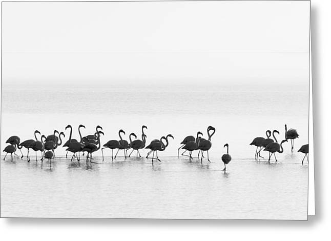 Flamingos Greeting Card by Joan Gil Raga