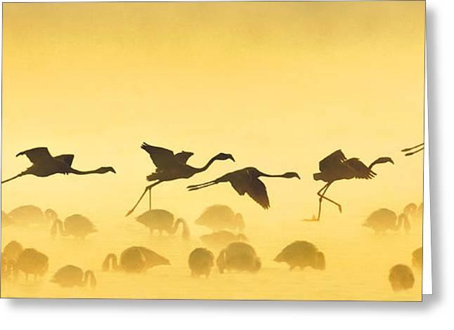 Spread Wings Greeting Cards - Flamingos Landing, Kenya Greeting Card by Panoramic Images