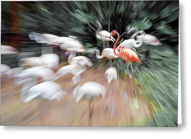 Flamingos Greeting Card by Pan Xunbin